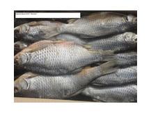 Рыба вяленая: Вобла, Лещ, Краснопёрка, Сопа, Щука